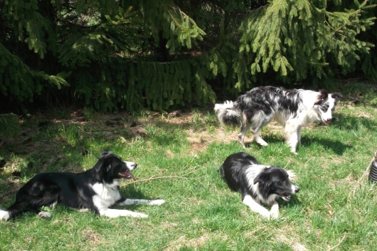 The dogs have been spoiled rotten - this is the life!